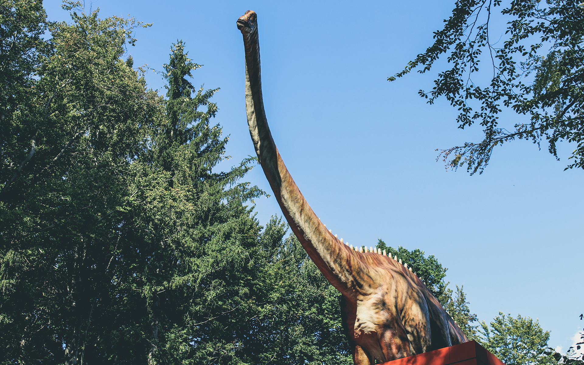 The Best Place For The Little Dinosaur Lovers